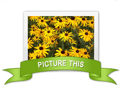 Picture This achievement earned on 5/9/2012 5:17:37 PM.