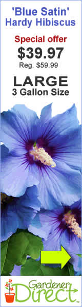 Hibiscus Blue Satin