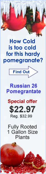 Russian 26 Pomegranate