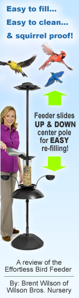 Review Of The EFFORT-LESS Bird Feeder